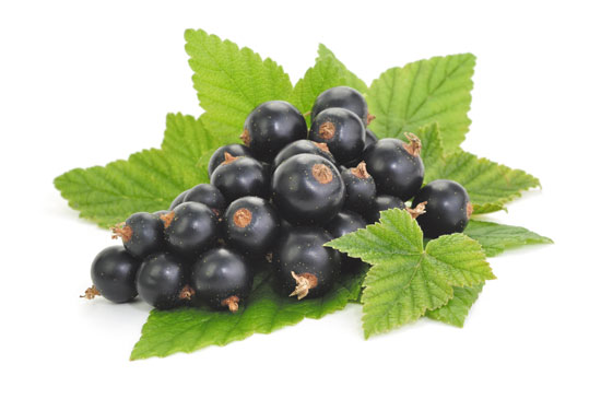 Blackcurrant Increases Cyclic Glycine-proline in Cerebrospinal Fluid and Has Potential to Treat Parkinson's Disease