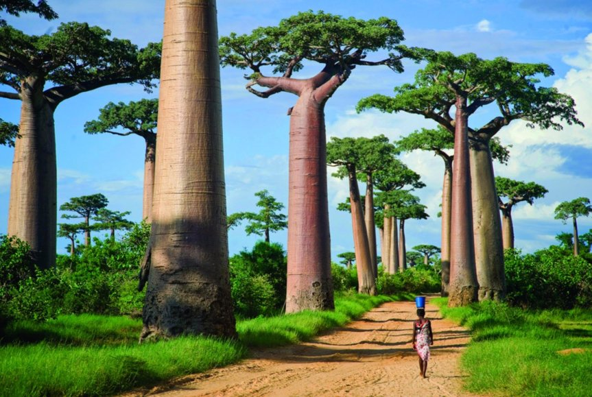 Antioxidant and Anti-diabetic Effects of Baobab from Mali