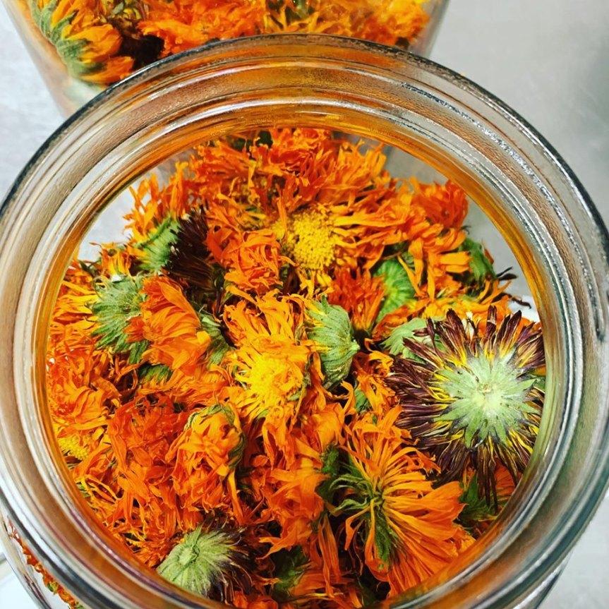 Calendula infused flowers