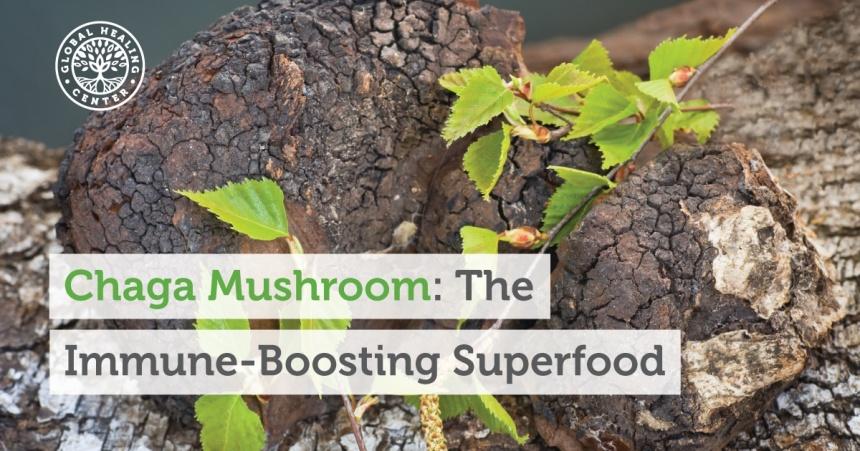 chaga-mushroom-the-immune-boosting-superfood-fb