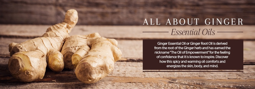 gingerroot oil